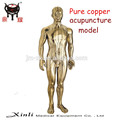 Factory copper acupunture human mode