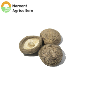Whole Organic Premium Grade Natural Dried Shiitake Mushrooms
