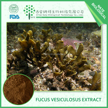 Factory Supply Products Natural Fucus Vesiculosus Extract 80% by HPLC