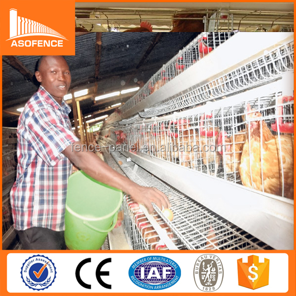 Kenya and Nigeria automatic poultry layer cages systems / layer chicken cages