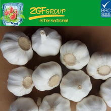 fresh Pure white garlic high quality in good sale