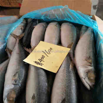 No Red Eye Sea Frozen Whole Round Pacific Mackerel Fish For Sale