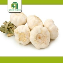 Brand new bulk fresh natural garlic made in China