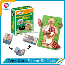 Educational toys Human Anatomy for school teaching