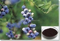 100% nature organic hot sale sweden bilberry extract