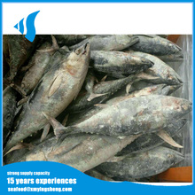 Wholesale Bulk packing fresh tuna