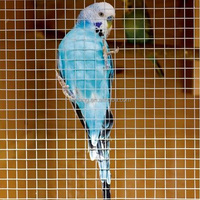 Galvanized Welded Wire Mesh for Poultry Cage (28 years manufacturer)