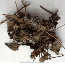 Herb garden Clematis filamentosa Dunn leaf root or whole plants