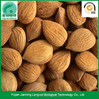 Raw Apricot Seeds for Sale