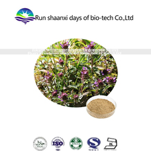 Spica Prunellae Extract / Prunella Vulgaris Extract / Common Selfheal Spike Extract
