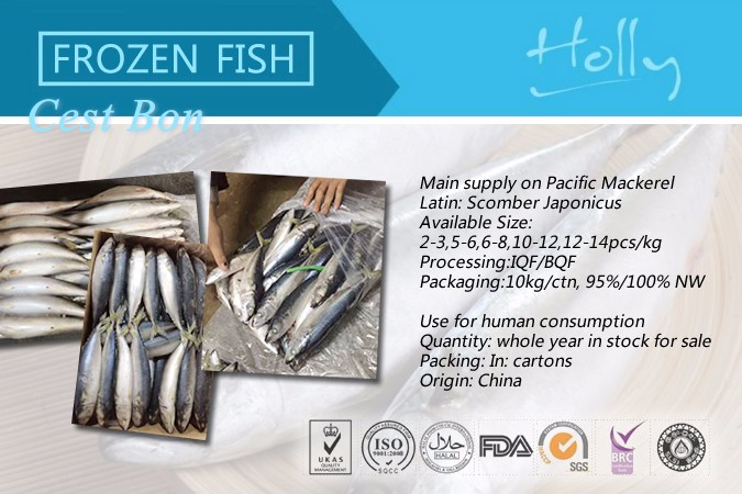 Deep sea fish Frozen pacific mackerel fish for canning 150-200g 200-300g light catch ship frozen 10kg carton 100% net weight
