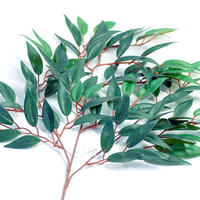 100 Pure Natural Australian Eucalyptus Oil