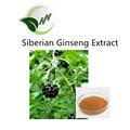 High quality with 0.8% /1.2%eleutheroside Siberian Ginseng Extract