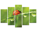 Cute Ladybird Photo Canvas Art Baby's Room Decoration Love Nature Love Insect Photo Canvas Printing Ready to Hang