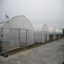 15 years warranty hot galvanized pipe China cheap film agriculture single span tunnel greenhouse