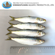 Frozen light catching whole round sardine fishes on sale