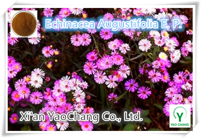 High Quality Echinacea Angustifolia Root Extract