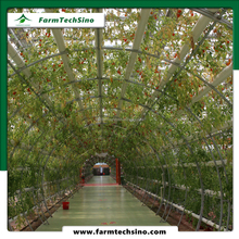 agriculture greenhouse multi span greenhouse glass greenhouse