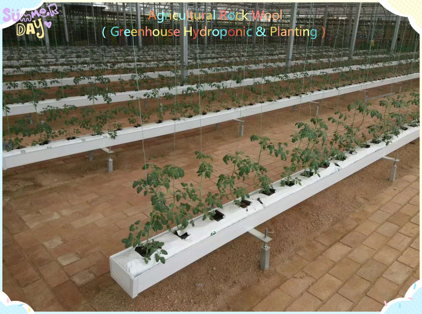 The latest popular Agricultural hydroponic rock wool cubes seeding block