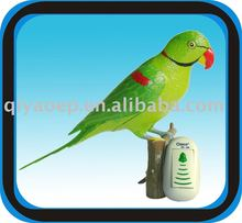 Wireless Digital Doorbell Message Recordable+Remote Controlled+Hand Painted+Lovely Parrot+Battery Type+Factory Offer