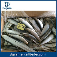 price frozen sardine fish wholesale, fish factory