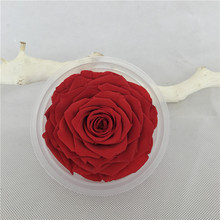 Big size red preserved fresh rose with real touch giant preserved fresh roses