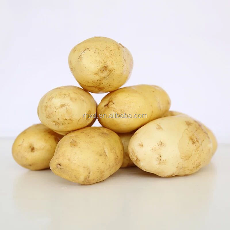 wholesale fresh russet potato and onion from chinese factory