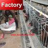 Alibaba China galvanized chicken laying cage with water supply system with great price