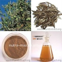 Professional Manufacturer 100% Natural YERBA MATE EXTRACT
