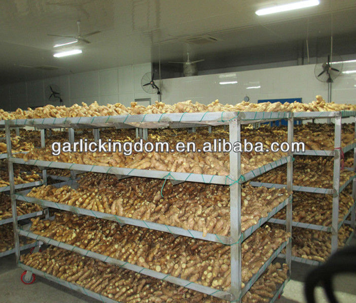 new crop fresh ginger,varieties of ginger,price of fresh ginger