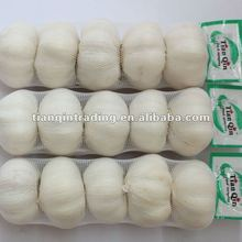 fresh chinese pure white garlic