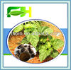 Best Quality Natural Ho Shou Wu Extract Powder