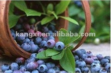 newest top quality blueberry anthocyanin 25% ( CAS 13306-05-3 ) powder to Enhance heart lungs function