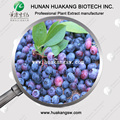 Lowest price Blueberry extract, blueberry p.e.
