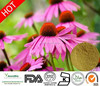 Top quality Polyphenols 8%, Pure Echinacea Purpurea Extract powder