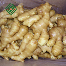 2017 crop fresh ginger indonesian fresh ginger