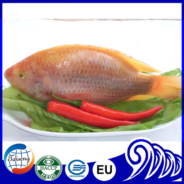 Wholesale Tilapia Price Red Tilapia Best Food Fish