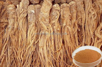 Less energy consumption the new arrival hot selling angelica dong quai extract