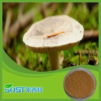 Wholesale alibaba dried oyster mushroom extract powder
