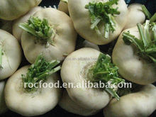 Chinese fresh pan cai turnip exporter in china