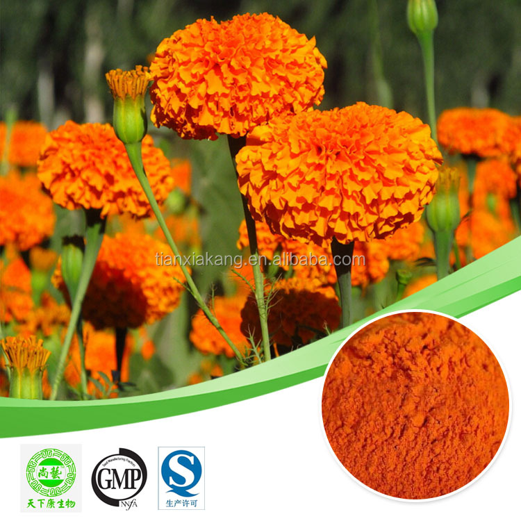 lutein marigold flower extract /extracts of marigold oleoresin / quality marigold extract