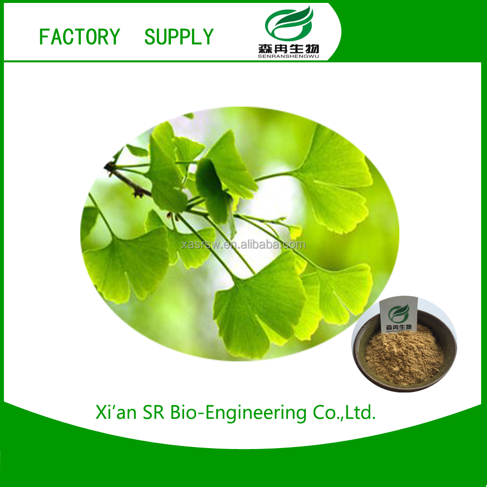high quality ginkgo leaf p.e. with best quality and low price