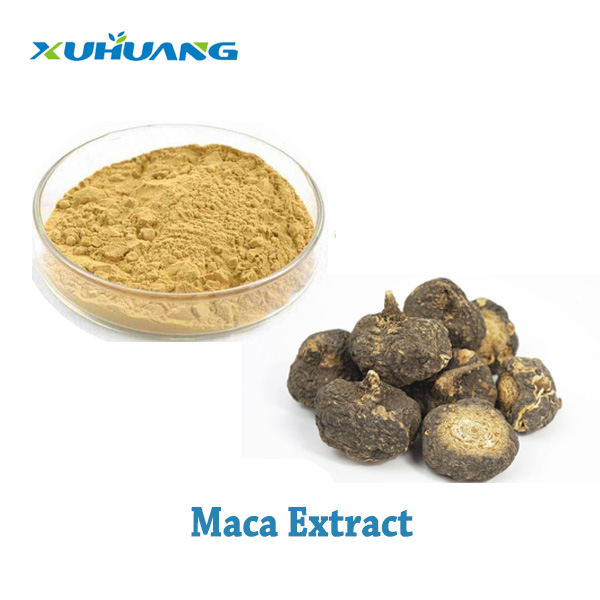 Good Quality Natural 100% Maca Root Extract 20 :1