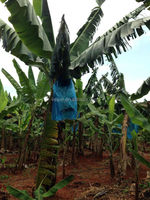 agriculture non woven cloth, tnt textile for banana cover