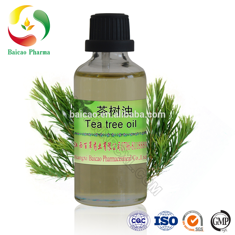 Tea tree melaleuca alternifolia essential oil