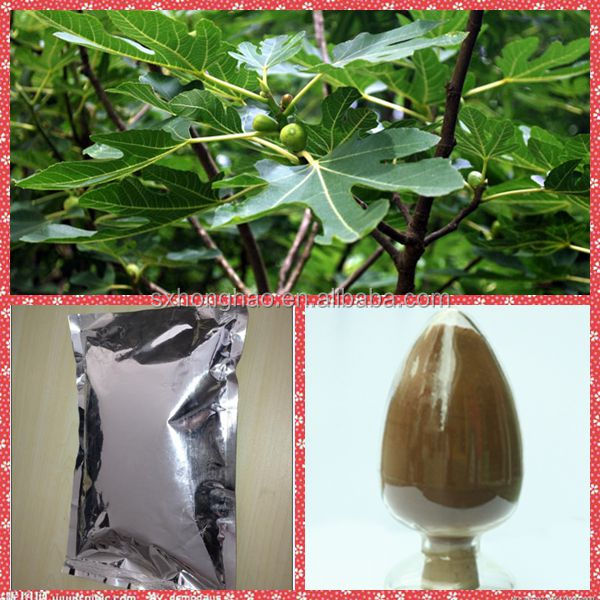 honghao supply free sample pure fig leaf extract