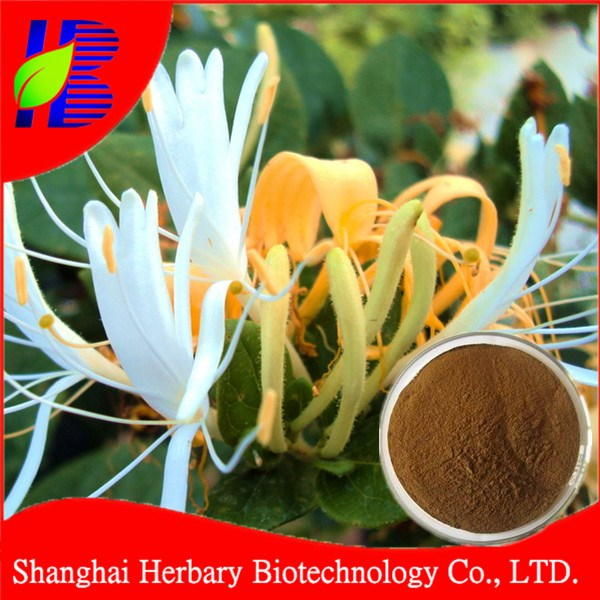 10% chlorogenic acids/dried honeysuckle extract