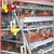 Nigeria hot supply Poultry Farm Layer Chicken Cage For Chicken Farm Sales