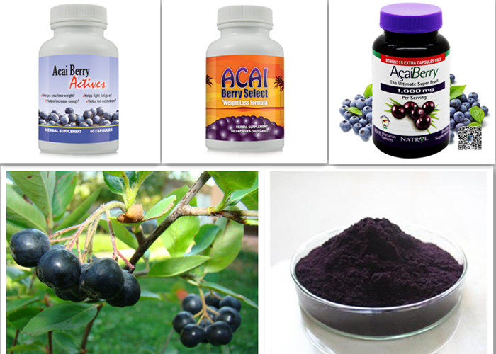 Food Supplement Organic Acai Berry Powder Euterpe Badiocarpa Extract