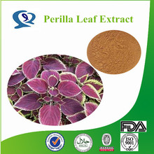 Top quality Natural Dried Perilla Leaf Extract,Perillae Folium Extract,Folium Perillae Extract
